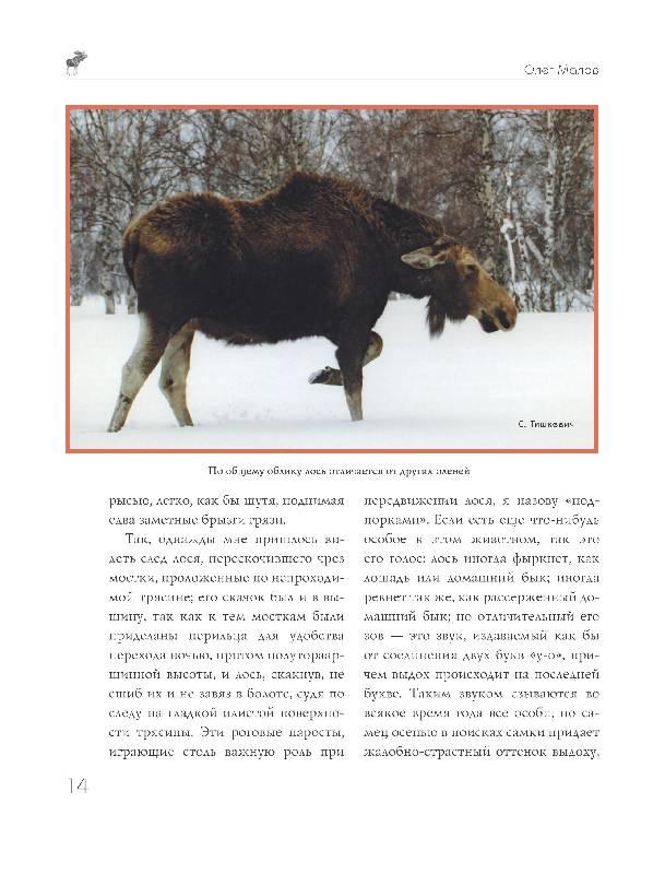 Иллюстрация 11 из 15 для Охота на парнокопытных - Олег Малов   Лабиринт - книги. Источник: Danon