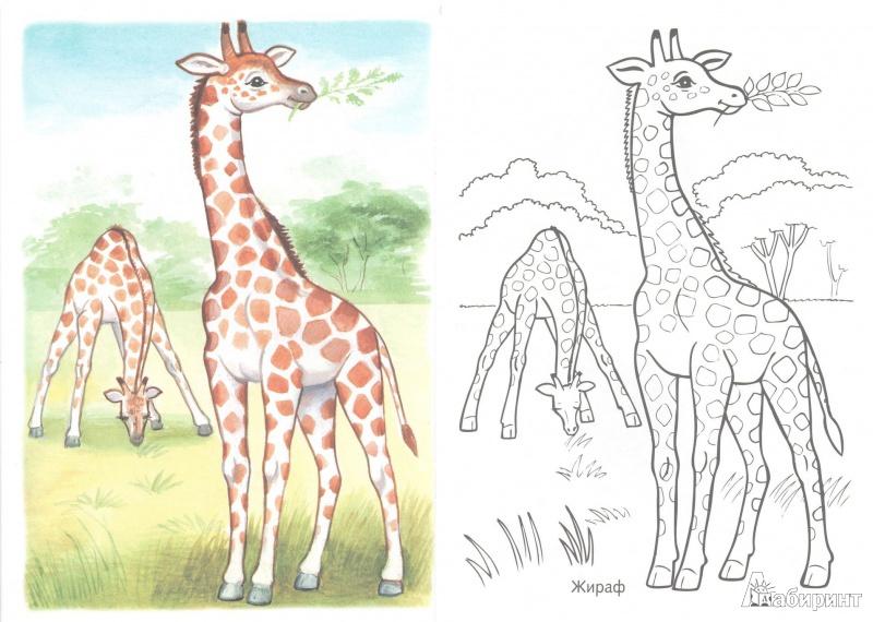 иллюстрация 3 из 15 для первые уроки раскраска животные
