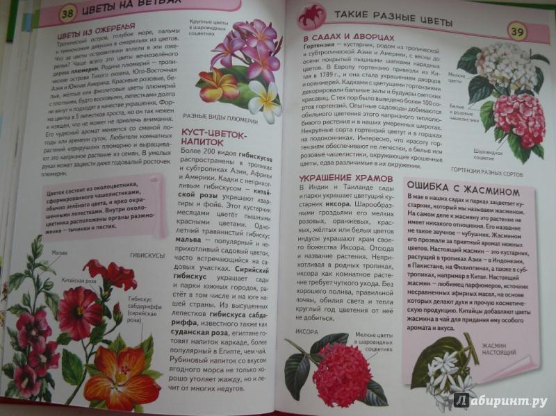 Иллюстрация 9 из 16 для Тропические растения. Удивительная флора жарких стран - Юлия Школьник | Лабиринт - книги. Источник: sv_33
