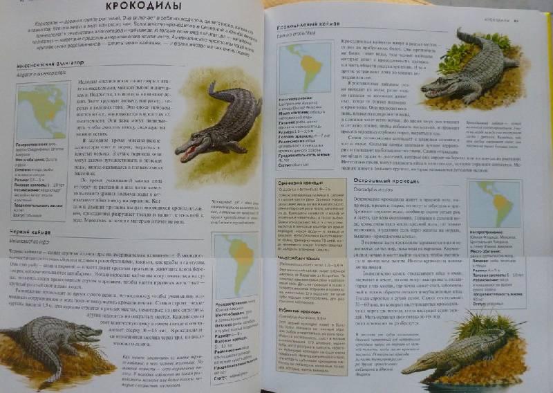 Иллюстрация 12 из 19 для Животные. Визуальная энциклопедия - Том Джексон   Лабиринт - книги. Источник: дева