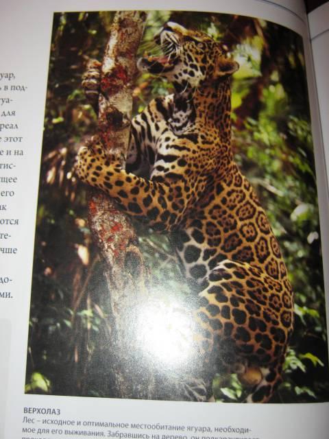 Иллюстрация 61 из 88 для Животный мир. Иллюстрированный атлас - Бамбарадения, Вудрафф, Гинзберг | Лабиринт - книги. Источник: М-и-л-е-н-а