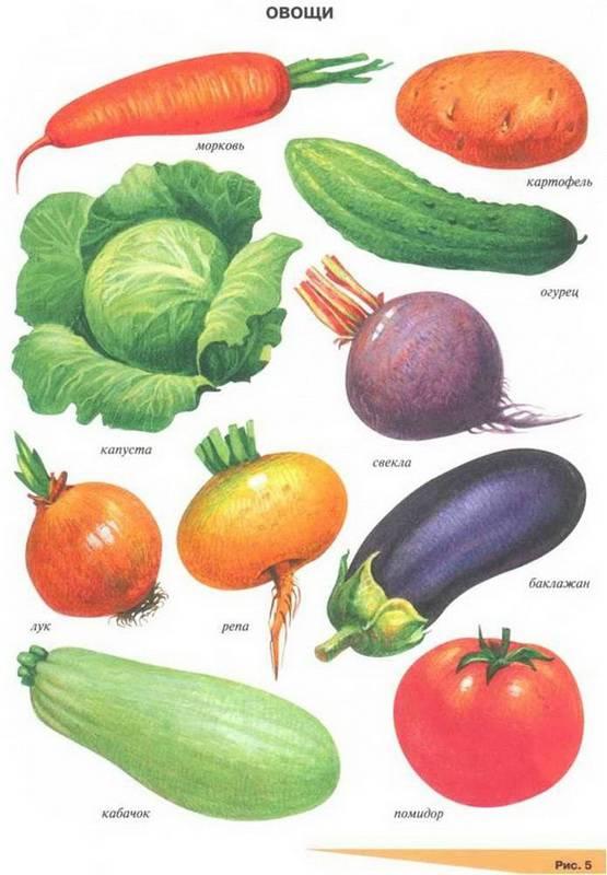 картинки овощей для занятий свой