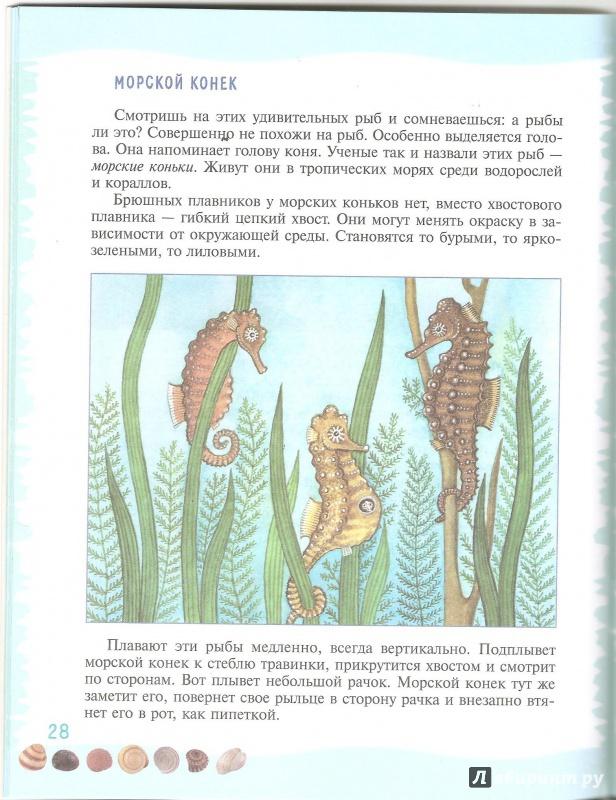Иллюстрация 23 из 39 для Тайны морского дна: книга для чтения детям - Геннадий Целищев   Лабиринт - книги. Источник: Alex