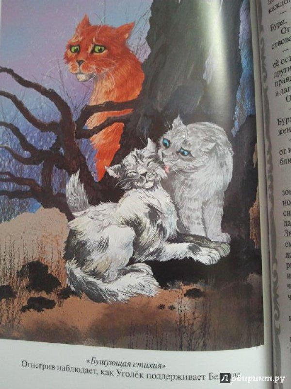 картинки котов-воителей английских книг существуют